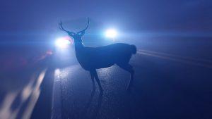 Wilcze oczy – elementy odblaskowe odstraszające dzikie zwierzęta