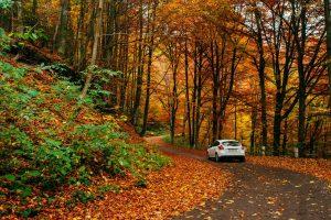 Oznakowanie dróg leśnych dostępnych dla ruchu
