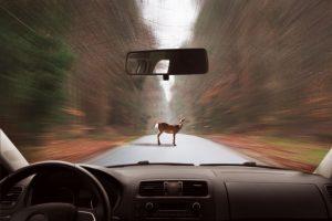 Zwierzęta na drodze – znaki ostrzegawcze i urządzenia BRD poprawiające bezpieczeństwo
